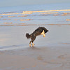 Doing her 'pouncing on nothing' trick on Mablethorpe Beach