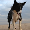 Beau on Mablethorpe Beach Nov 12