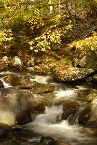 Hand-held picture of stream