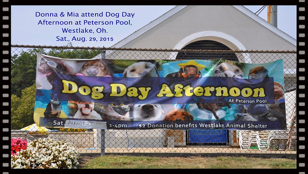 Dog Day at Peterson Pool, Donna, Mia, lisa, Caitlin, Matthew, Alexandra & Willie all attend.  Sat., Aug. 29, 2015