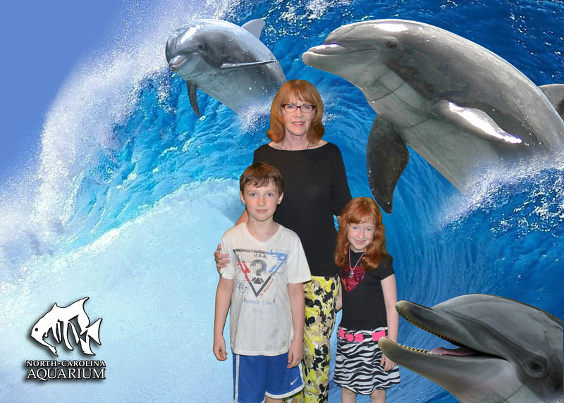 G,D,L dolphins