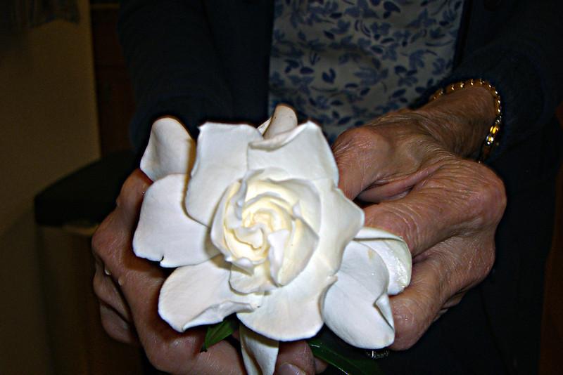Bubbie holds gardenia in PA