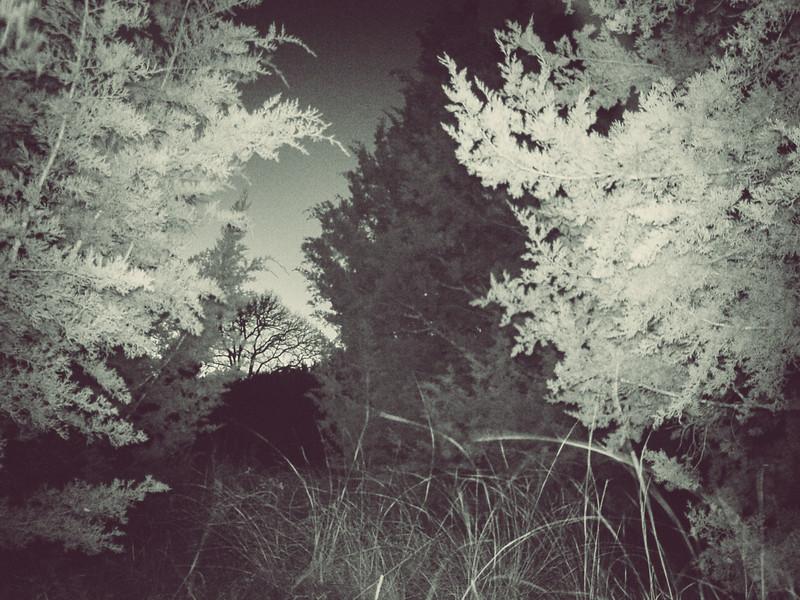 Backyard Nature Cam - Jan 11, 2018, 6:32pm