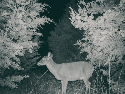 Backyard Nature Cam - Jan 8, 2018, 8:09pm