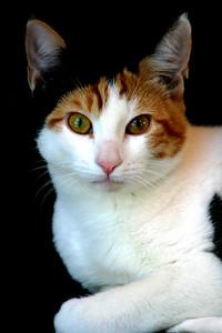 Matthew's cat Victoria.