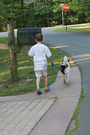 Aaron likes to walk Bessie