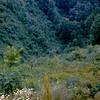1964-06 - Smokey Mountain valley
