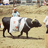 Bull Fight - enter the bull
