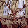 1965-09 - Black Hills - Reptile Garden bird sanctuary