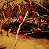 1965-09 - Black Hills - Reptile Gardens bird sanctuary