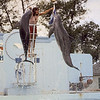 1977 - Valley Fair - Dolphin show