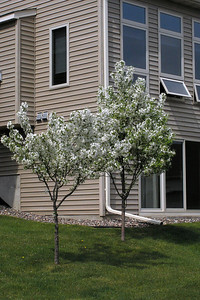2005-05-08 - Back side of house - flowering trees