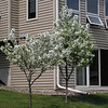 2005-05-08 - Back side of house - flowering trees