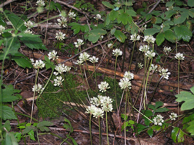 Wild Flowers in the woods