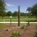 Palm Tree planted summer 2010 by VdeG Landscape Group in honor of Randy Voas. Can be seen from our Florida Room.