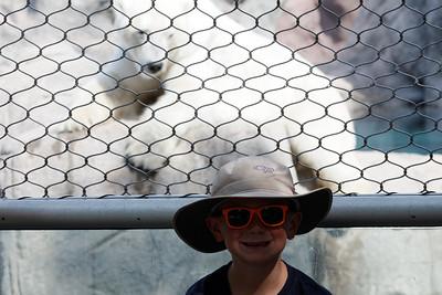 ABQ zoo