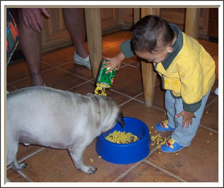 Feeding the Pug (71751168)