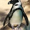 penguin (89462540)