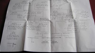 Keiko's family tree.