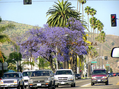 Summer in Filmore, on the way home - in traffic July '07.