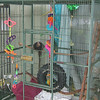 Cages for colorful birds