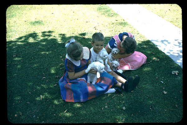 playing_with_shews_pups.