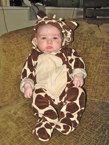Edmund the giraffe