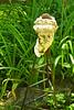 458 Statue Head