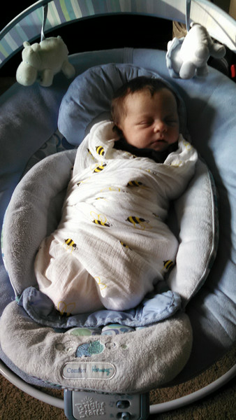 Covered in bees!  Swaddled tight to keep her calm.