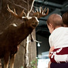 meese!<br /> (Ellie's first trip to the NYS Museum)