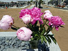 Peonies for Emery. The background shows another section of the cemetery.