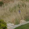 Ben heading down into the ravine.