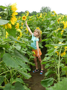 Sofia with the sunflowers at Buttonwood Farm