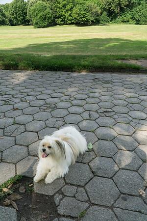 Biggie loves the park.
