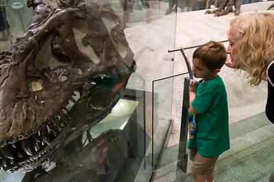 Contemplating T-Rex.