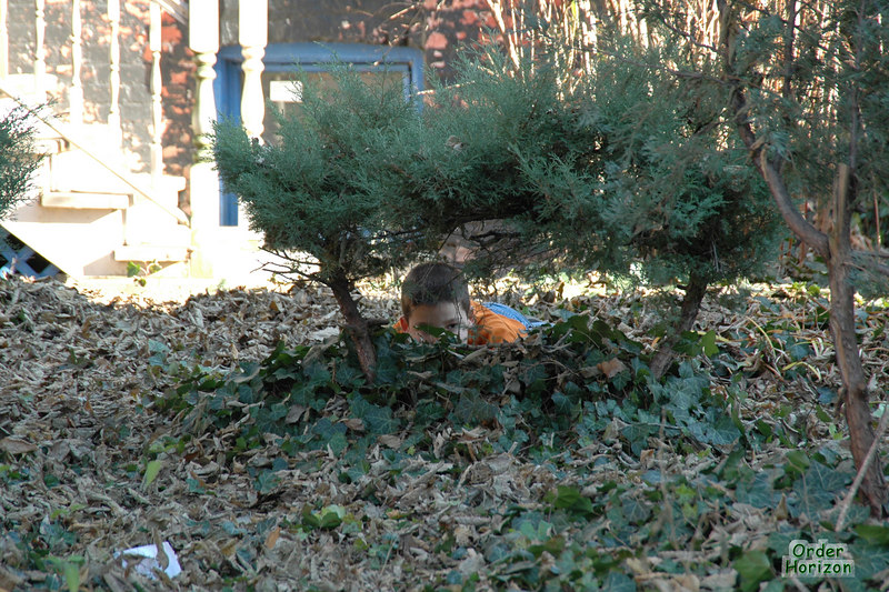 There are some very odd looking squirrels in Chicago. Must be the water.