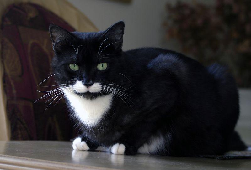 Our cat, Binky