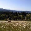 margaritas - daisy flowers
