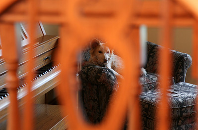 My family's dog Honey seen through a dining room chair at my parent's house in Oak Forest, Illinois on November 25, 2010.  (Jay Grabiec)