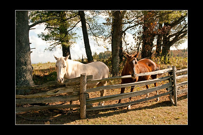 Horses at the Trading Post on the Blue Ridge Parkway