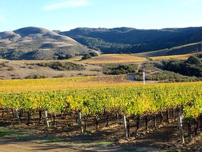 Vignes dans la vallée de Santa Ynez