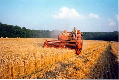 Didier is working hard (harvesting barley)