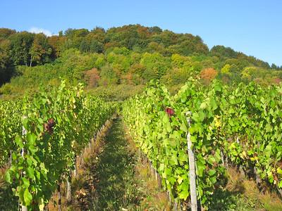 Les Cotes de Meuse avec ses vignobles