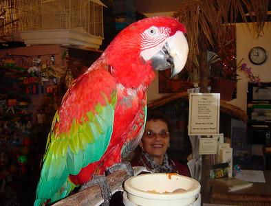 18 perroquet