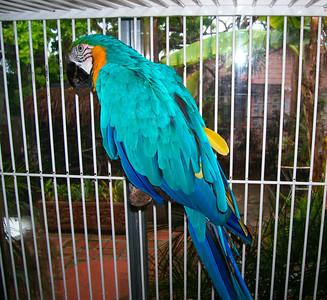 19 perroquet