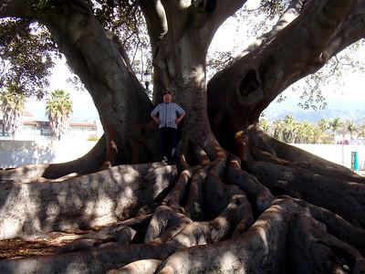 12 racines