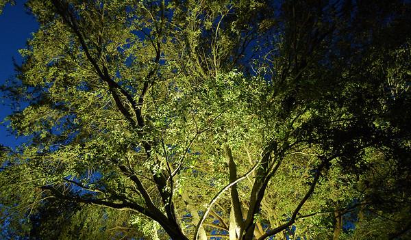 night thru the trees