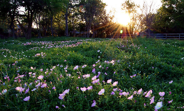sunset over the meadow