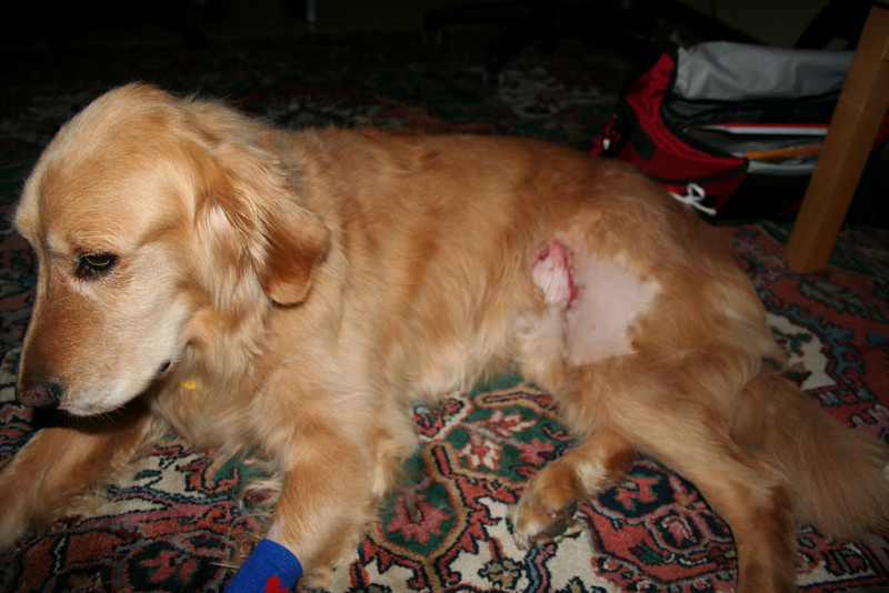 Our dog, Brighton, had a cancerous tumor removed from his hind quarter.  He's doing fine now.