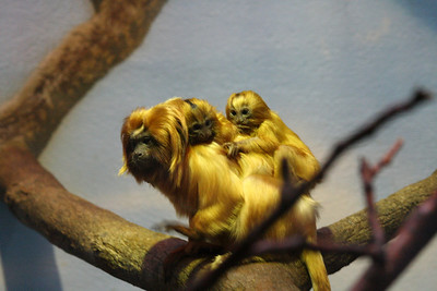 More of the monkey with babies!